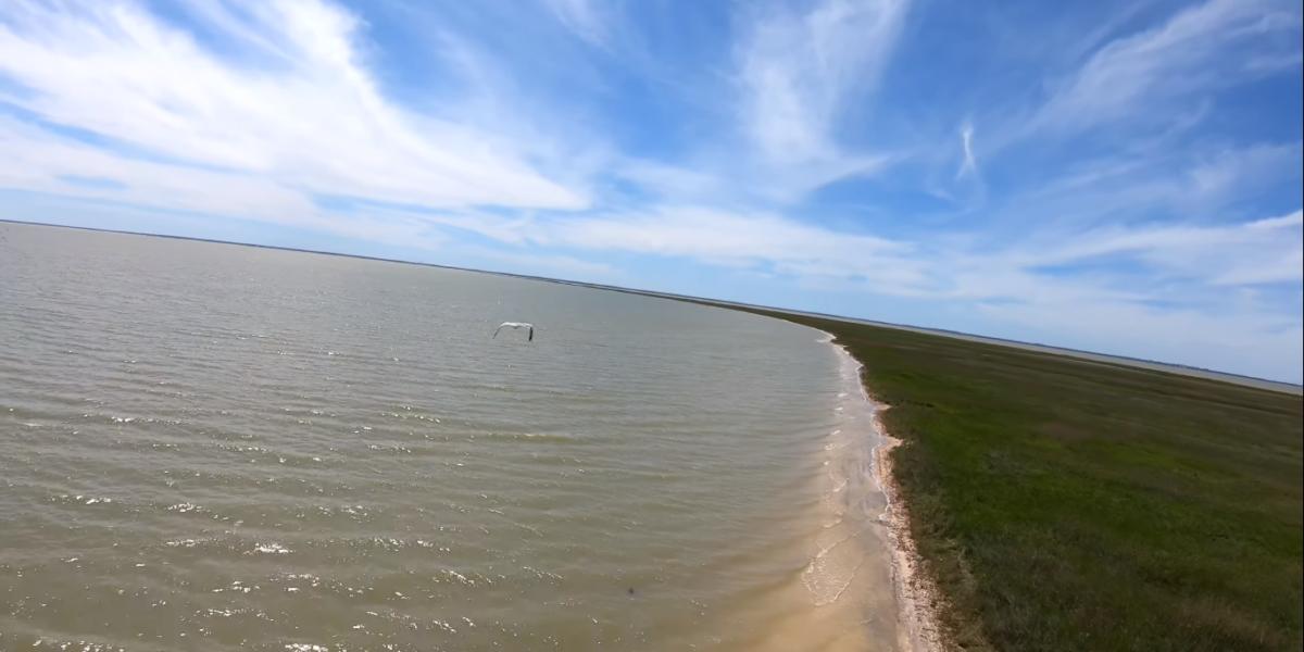 Вызов от чайки и неуверенное кружение на побережье в умеренный ветер